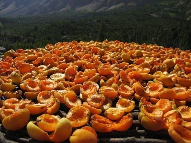 Высушенные на солнце абрикосы